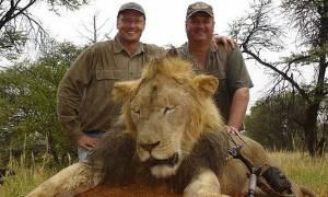 Ζιμπάμπουε: Δεν θα διωχθεί ο οδοντίατρος που σκότωσε το λιοντάρι Σέσιλ