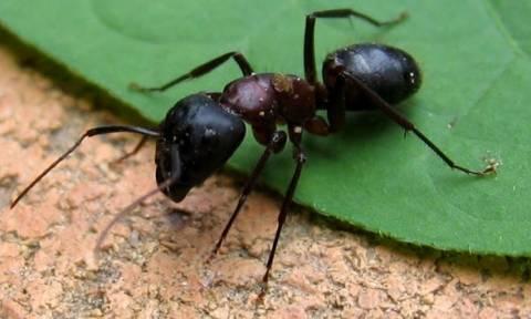 Αυστραλός επιβίωσε στην έρημο τρώγωντας μυρμήγκια για έξι μέρες (pics)!