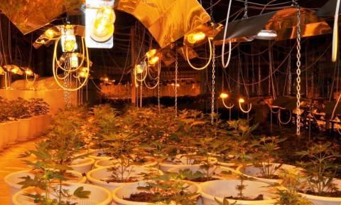 Ναύπλιο: Εντοπίστηκε μεγάλη φυτεία χασίς - Συνελήφθησαν δύο Κροάτες (pics)