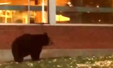 δωρεάν αρκούδα πορνό βίντεο δράκους λεσβιακό πορνό