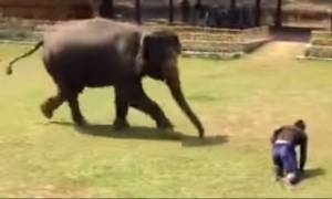 Απίστευτο βίντεο: Ελέφαντας σώζει το φροντιστή του από επίθεση αγνώστου!