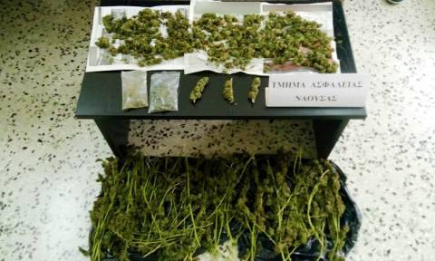 Νάουσα: Δύο συλλήψεις για καλλιέργεια και κατοχή ναρκωτικών