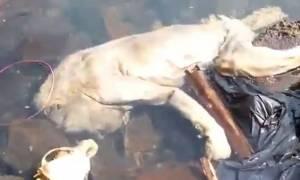 Σάλος με το μυθικό πλάσμα… βαμπίρ που βρέθηκε στην Παραγουάη (video)