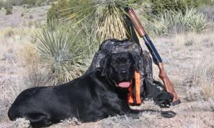 Σκύλος με το όνομα… Σκανδάλη πυροβόλησε την ιδιοκτήτριά του!