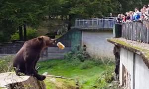 Η πιο τεμπέλα αρκούδα της Ιστορίας: Εκπαιδεύει ανθρώπους στο… σημάδι! (video)