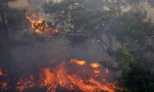 Πήρε πίσω ο Σκουρλέτης την «ύποπτη» διάταξη για τα αναδασωτέα δάση