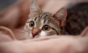 Και μία διαφορετική έρευνα: Το πόσο επιθετική είναι η γάτα σας εξαρτάται από το χρώμα της
