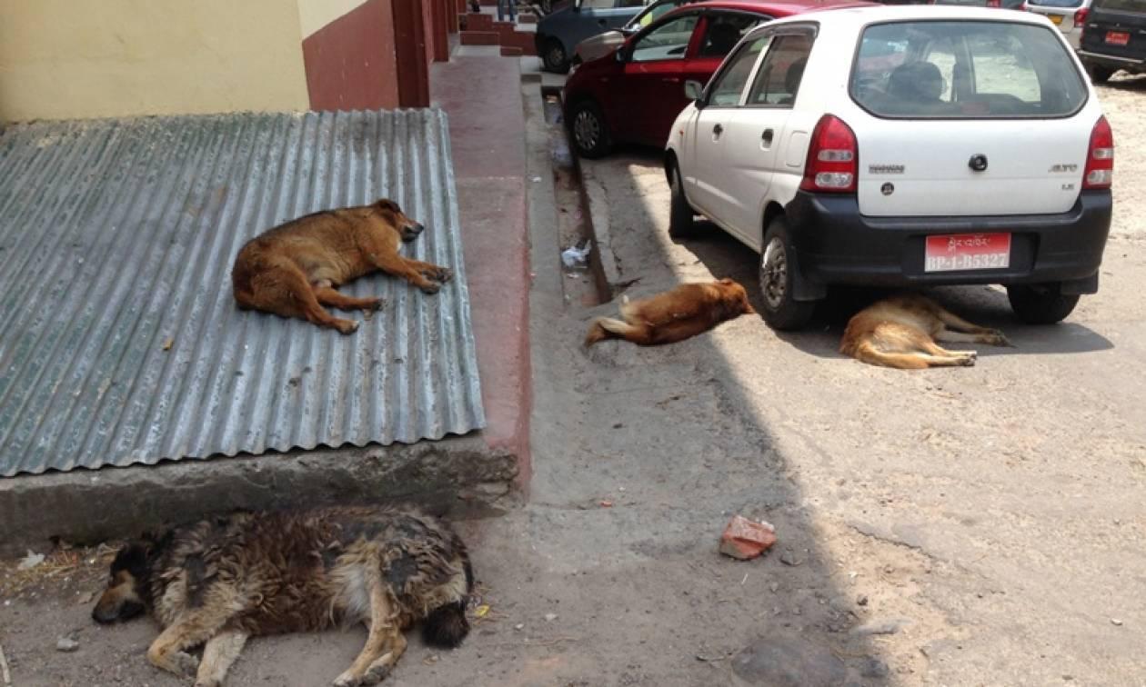 Στο Μπουτάν είναι ευτυχισμένοι γιατί… κοιμούνται πολύ!