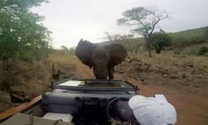 Εξαγριωμένος ελέφαντας επιτέθηκε σε κινηματογραφικό συνεργείο! (video)