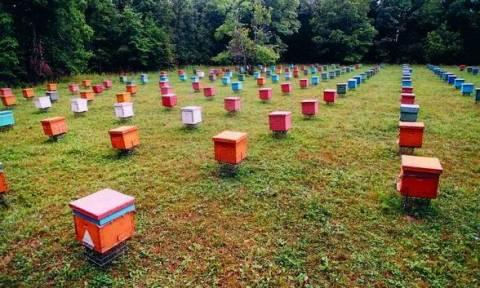 Ενίσχυση 1,2 εκατ. ευρώ σε μελισσοκομικούς συνεταιρισμούς