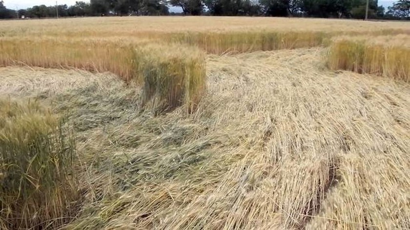 Μυστηριώδη σχήματα σε καλλιέργειες αναστατώνουν τους κατοίκους της Αργεντινής (pics+vid)