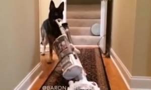 Σκύλος για σπίτι: Σκουπίζει, καθαρίζει και βάζει και… πλυντήριο! (video)