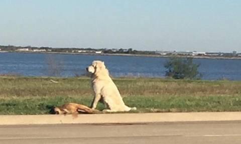 Βρέθηκε ο ιδιοκτήτης του σκύλου που «ράγισε» καρδιές με την αφοσίωσή του