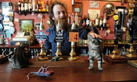 Μετά τα Καφέ με Γάτες, άνοιξε το πρώτο pub με γάτες
