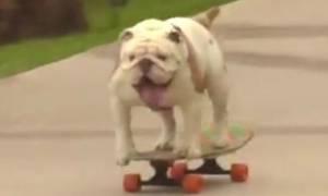 Δείτε τι απίστευτο έκανε αυτός ο σκύλος και μπήκε στο βιβλίο Γκίνες (video)