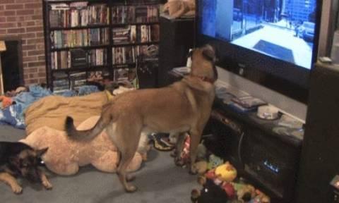 Δείτε την ξεκαρδιστική αντίδραση αυτού του σκύλου όταν βλέπει κινούμενα σχέδια! (video)