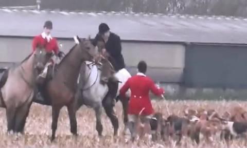 «Αρρωστημένο» κυνήγι στη Βρετανία: Δεκάδες σκυλιά κατασπάραξαν αλεπού (video)