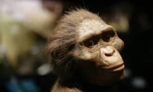 Αυστραλοπίθηκος Λούσι: Η Google τιμάει με doodle τα 41 χρόνια από την ανακάλυψή της (vids+pics)