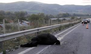 Με σοβαρά τραύματα στο «Γεννηματάς» γυναίκα μετά από τροχαίο με άλογο