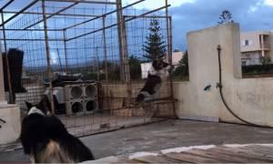 Απίστευτο βίντεο: Σκύλος χρησιμοποιεί τεχνικές… αναρρίχησης για να συναντήσει την αγαπημένη του!