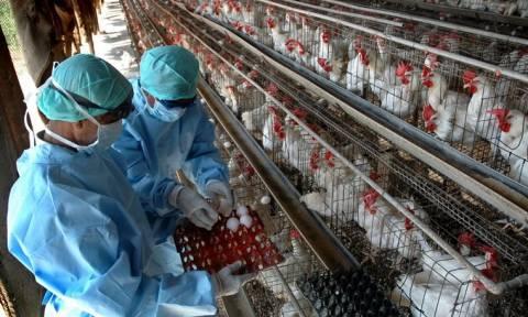 Συναγερμός για τη γρίπη των πτηνών!