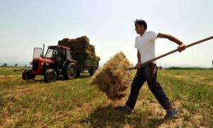 ΟΠΕΚΕΠΕ: Κάντε κλικ εδώ και δείτε αν δικαιούστε τις αγροτικές επιδοτήσεις 2015