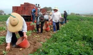 ΟΠΕΚΕΠΕ: Καταβλήθηκαν οι αγροτικές επιδοτήσεις – Δείτε αν δικαιούστε