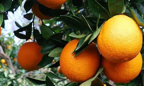 Ηράκλειο: 68χρονη έχασε τη ζωή της μαζεύοντας πορτοκάλια