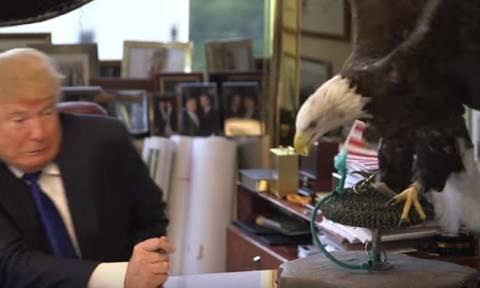 Ο αετός σύμβολο των ΗΠΑ επιτέθηκε στον Τραμπ! (video)