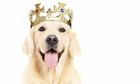 Ταϊλανδός αντιμετωπίζει ποινή 37 ετών για ασέβεια προς τον βασιλικό σκύλο (Vid)