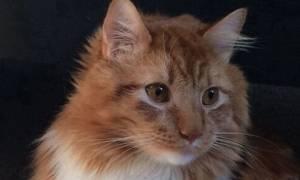 Το πλάσμα που έχει «τρελάνει» το διαδίκτυο: Μισή γάτα, μισή… κότα! (photo)