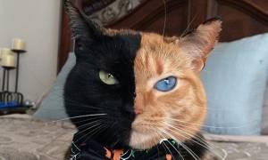 Η γάτα που είναι μισή... τίγρης και μισή... πάνθηρας (photos - video)