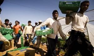 «Μανωλάδα» Ισπανίας: Είχαν μετατρέψει πρόσφυγες σε σύγχρονους σκλάβους σε θερμοκήπια
