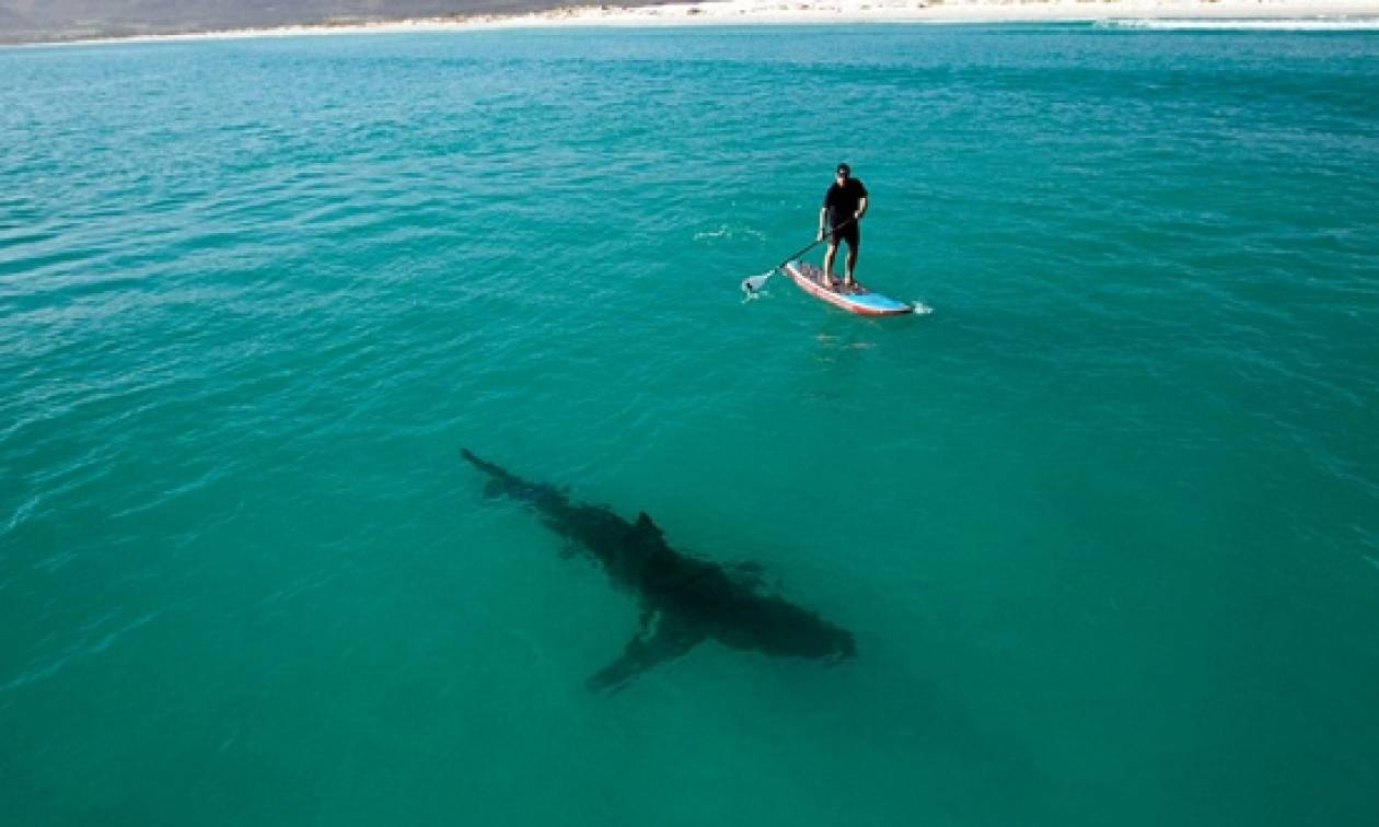 Αυστραλία: Καρχαρίας όρμησε πάνω στη σανίδα σερφερ (vid ...