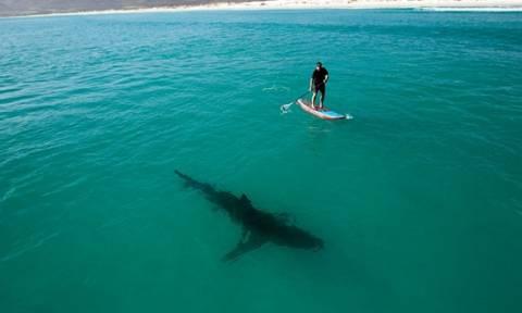Αυστραλία: Καρχαρίας όρμησε πάνω στη σανίδα σερφερ (vid)