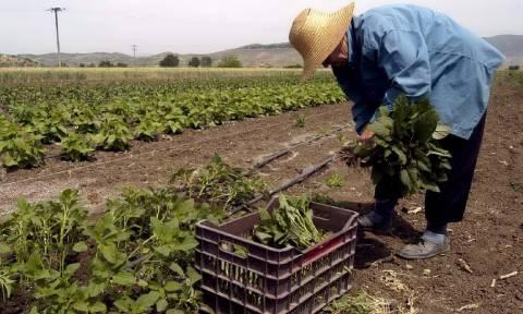 Νέο πρόγραμμα για αγρότες και κτηνοτρόφους: Μοιράζονται 20 δισ. ευρώ