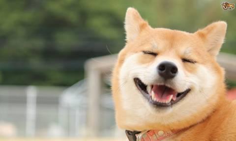 Τα σκυλιά ανταποκρίνονται αμέσως στα συναισθήματα των άλλων σκυλιών