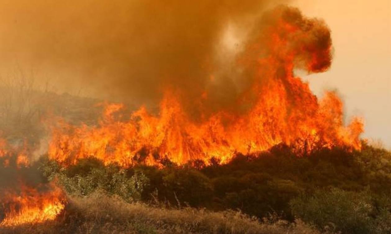 Λιγότερες ήταν οι πυρκαγιές το 2015