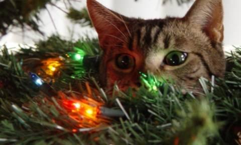 Γερμανία: Τους ήρθε για ...χριστουγεννιάτικο δώρο ο χαμένος γάτος τους!