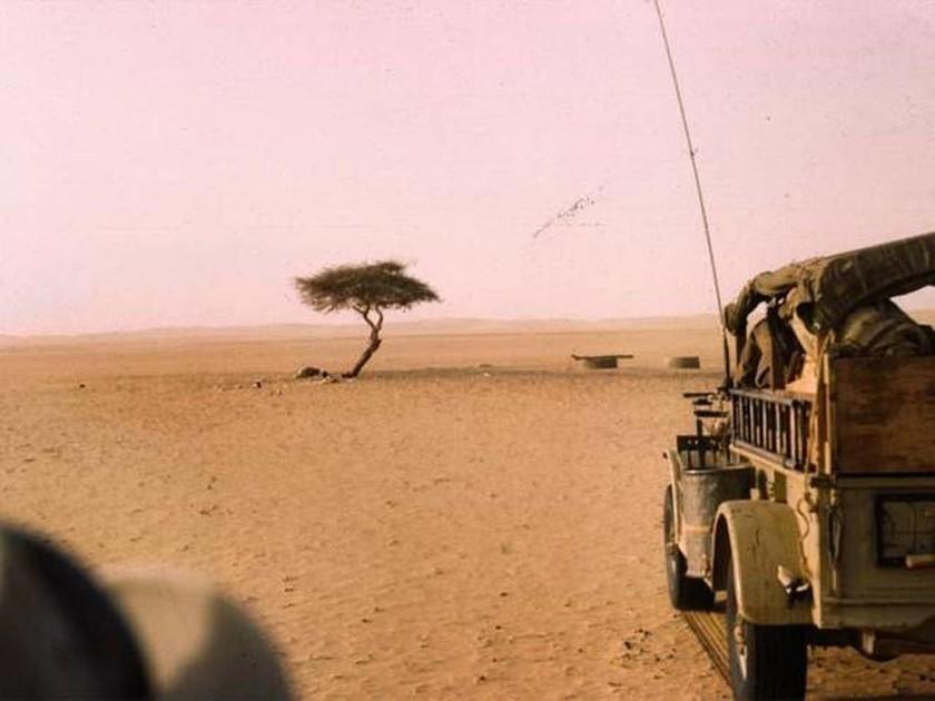 Η ιστορία του πιο μοναχικού δέντρου στον κόσμο…(pics)