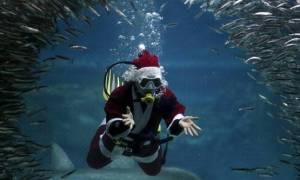 Πάφος: Οι χειμερινοί κολυμβητές κολύμπησαν ντυμένοι Άγιοι Βασίληδες