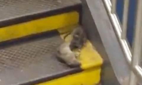 Κανίβαλος… αρουραίος τρομοκρατεί το μετρό της Νέας Υόρκης (video)