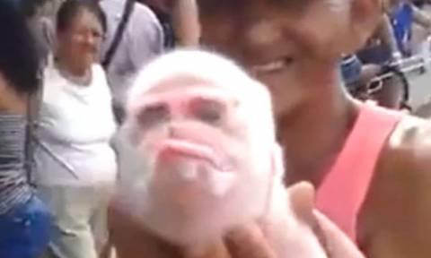 Το πιο απόκοσμο πλάσμα: Γεννήθηκε γουρούνι με πρόσωπο… μαϊμούς! (video)