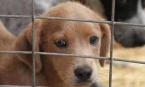Στα πιο σοβαρά κακουργήματα κατατάσσει το FBI την κακοποίηση ζώων