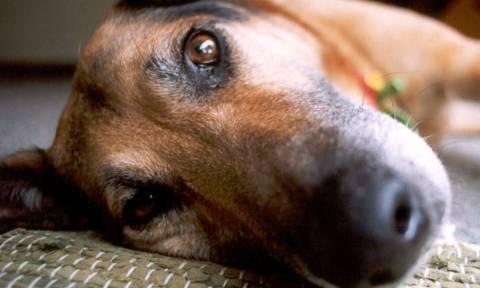 Δεκάδες σκυλιά στο έλεος φιλοζωικών ομάδων