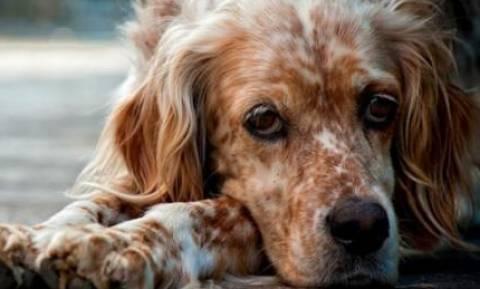 Σύλληψη 44χρονης για πώληση σκύλου