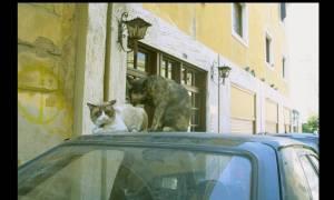 Οι γάτες της Ελλάδας