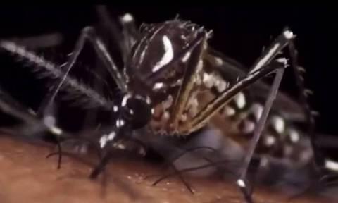 Όλα όσα πρέπει να ξέρετε για τον ιό Ζίκα που εξαπλώνεται