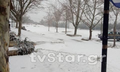 Καιρός: Πυκνό πέφτει το χιόνι στη Φθιώτιδα - Κλειστά τα σχολεία στο Δομοκό (photos)