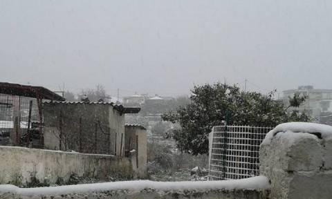 Κακοκαιρία: Πυκνή χιονόπτωση στην Εύβοια – Δείτε Live εικόνα